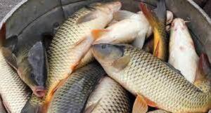 বরগুনাসহ বরিশাল বিভাগে মাছ ও ফসলের উৎপাদন বেড়েছে